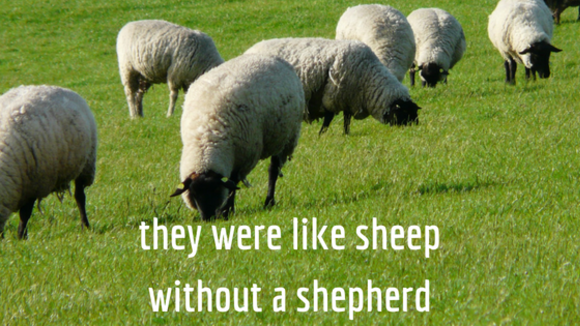 They Were Like Sheep Without A Shepherd